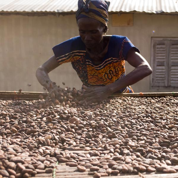 70% of the worlds cocoa comes from west Africa.